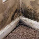 mold damage bentonville, mold damage cleanup bentonville