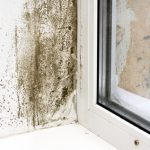mold damage restoration bentonville, mold damage bentonville