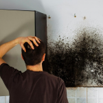 mold removal bella vista, mold remediation bella vista,
